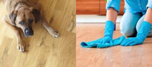 Protect Wood Floors