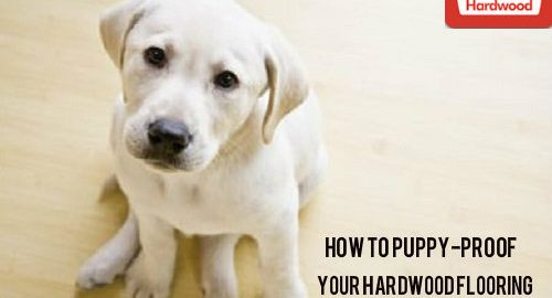 How to Puppy-Proof Your Hardwood Flooring